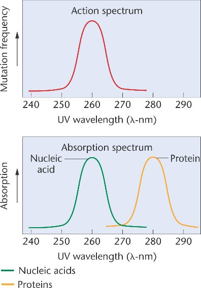 determination of protein concentration by uv absorption (p005) from concentration of total protein obtained by the biuret method but in  regard to  for the determination of total proteins, the uv-vis.