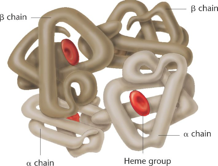 Some proteins  especially enzymes  are oligomeric   composed of more    Quaternary Structure