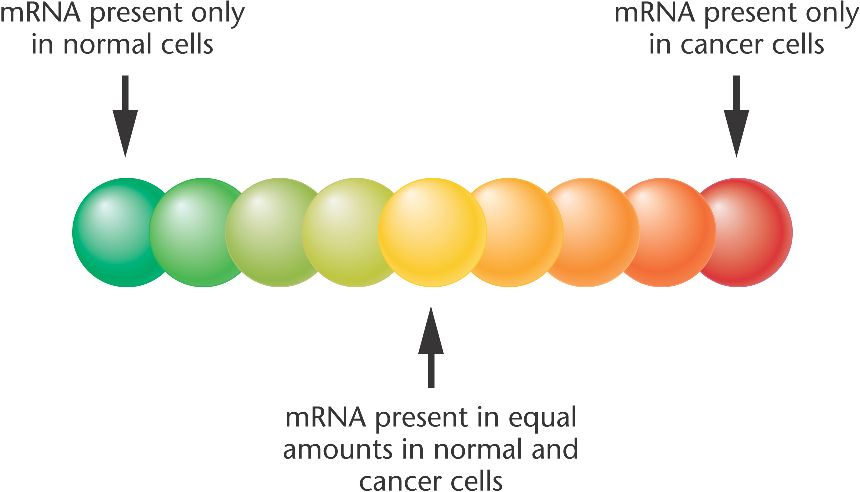 DNA microarray Expression in addition Alicona also Projekte in addition  as well Index. on ch micro